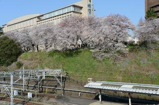 桜2012 DSC_0012.jpg
